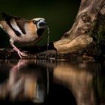 Jonas-Classon-Fåglar i vått och torrt