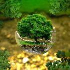 Miljö-Klimat