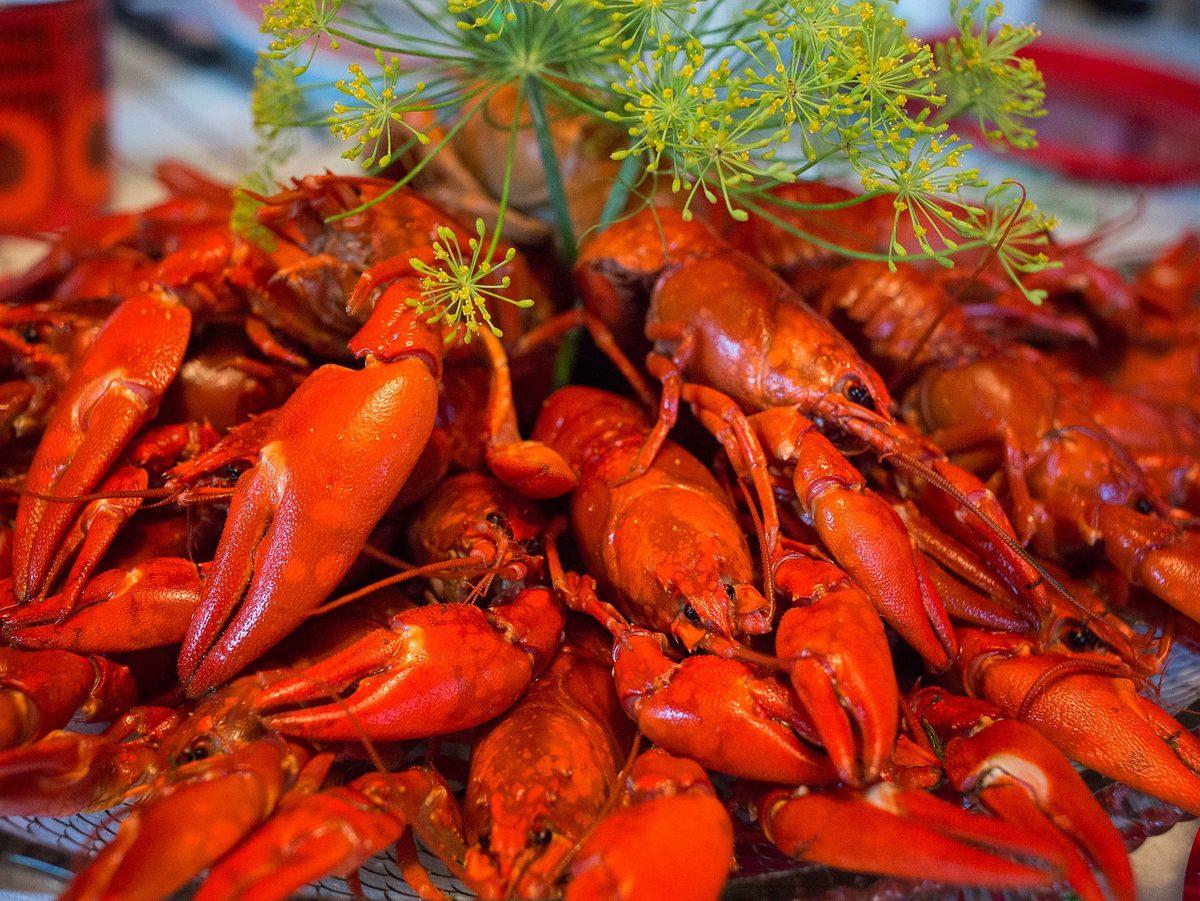 Kräftor-Crayfish
