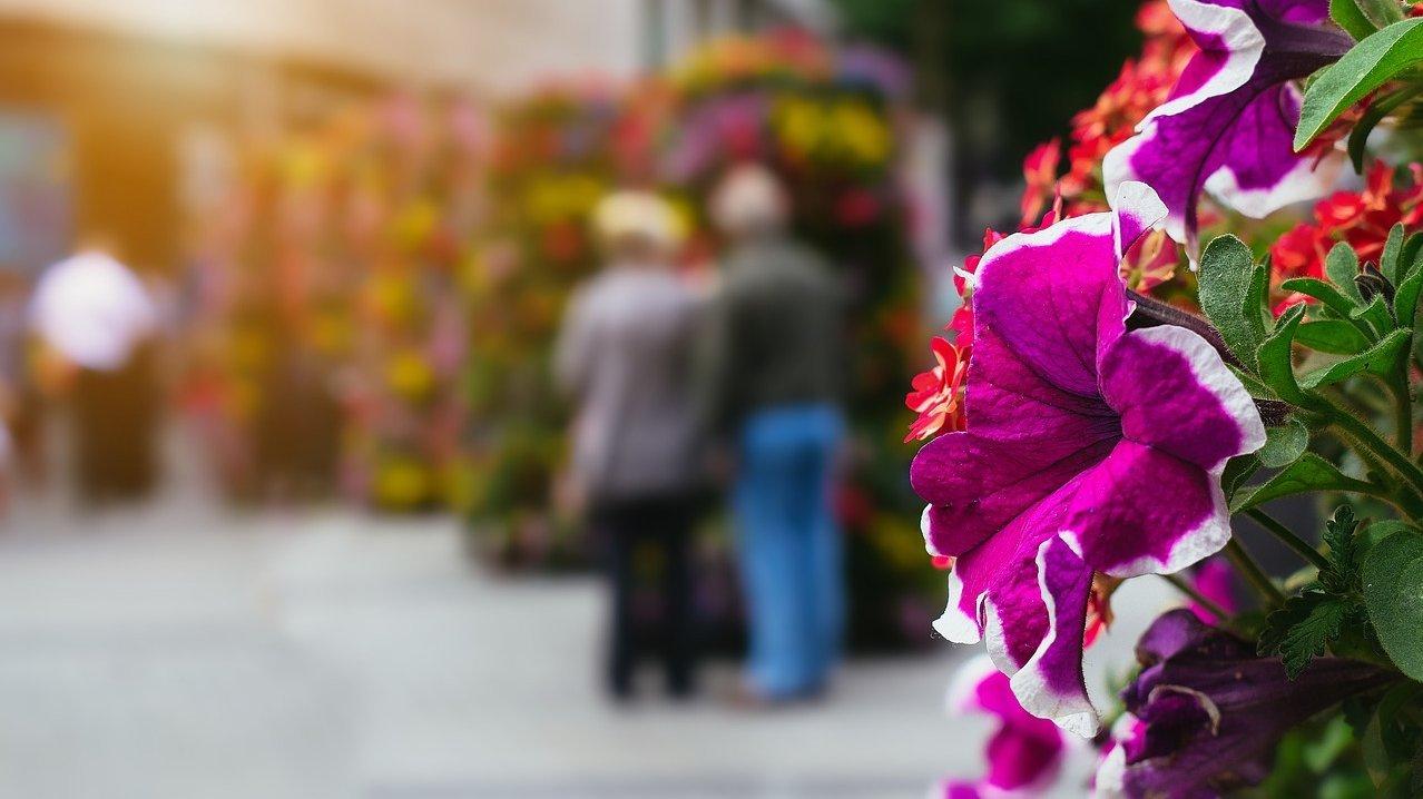 Människor-Anhörig-Blomma